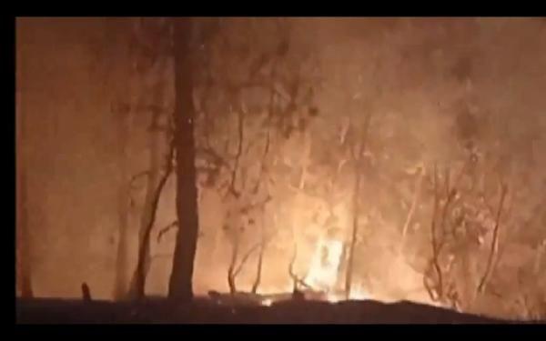 Samsun'da orman yangını; 7 hektarlık alan zarar gördü