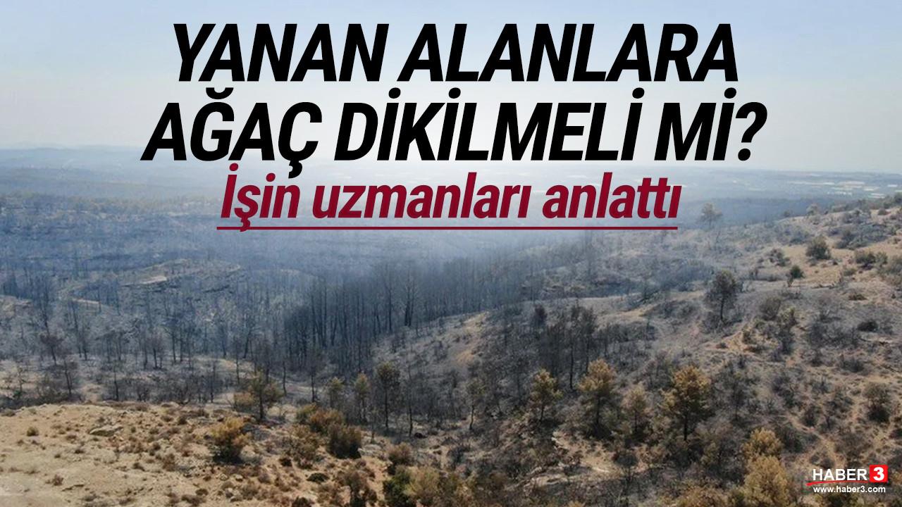 Yanan alanlara ağaç dikilmeli mi? İşin uzmanları anlattı