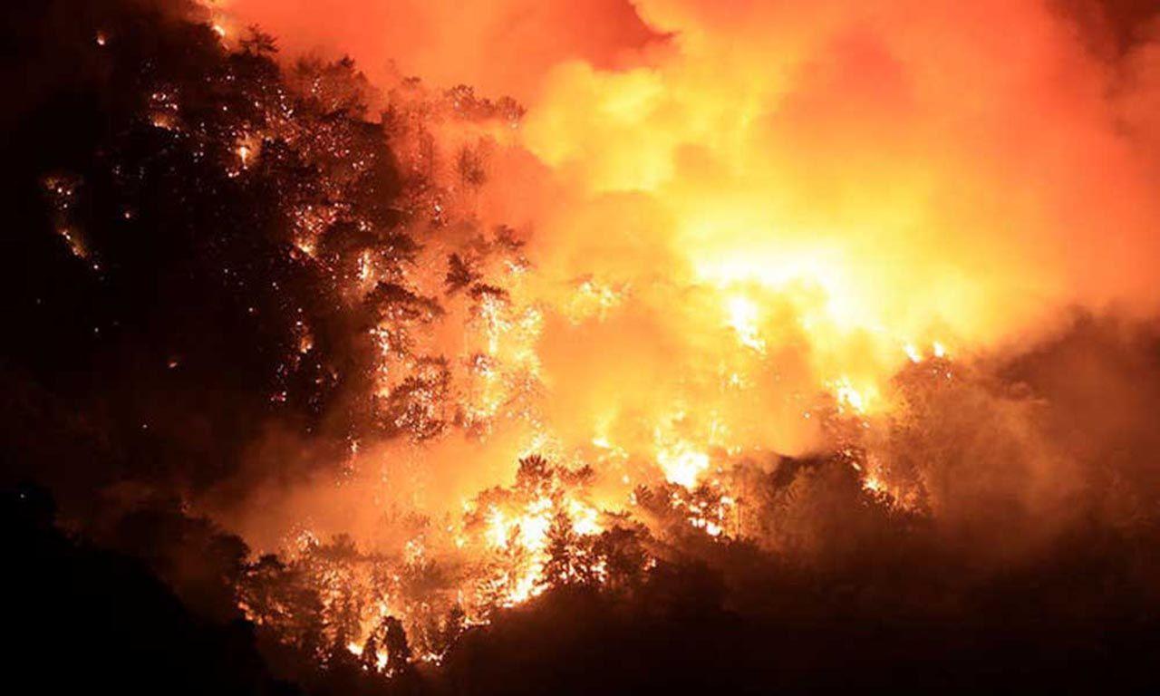 Orman yangınının çıktığı bölgelerden gelen bu fotoğraf yürek parçaladı - Resim: 2