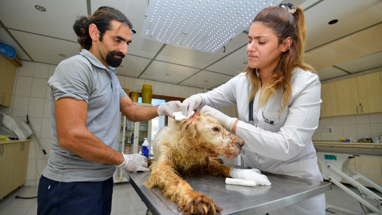 Yangından kurtarılan hayvanlar Muratpaşa Belediyesi'ne emanet