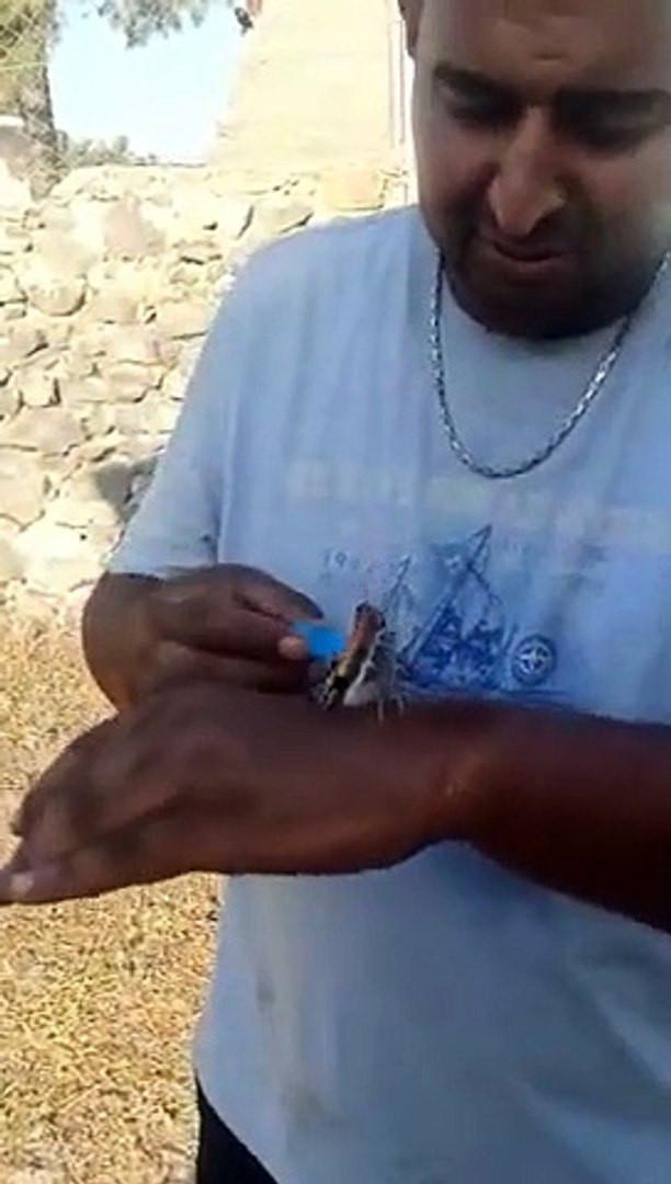 Yangından kaçan kelebek, vatandaşın elinden su içti