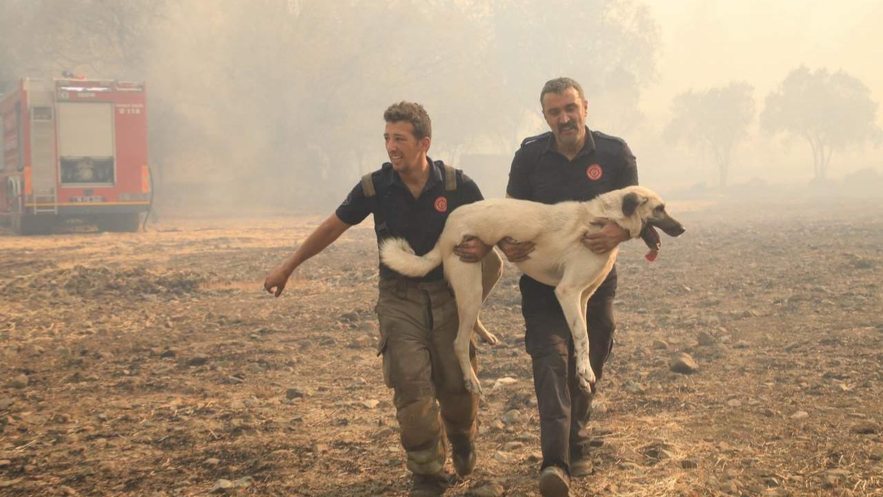 İBB ekipleriyle yangın bölgesinde can dostlarımızı da unutmadı