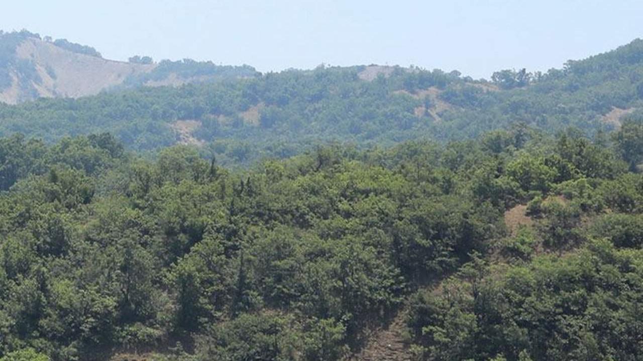 Bir ilde daha ormanlık alanlara giriş yasaklandı