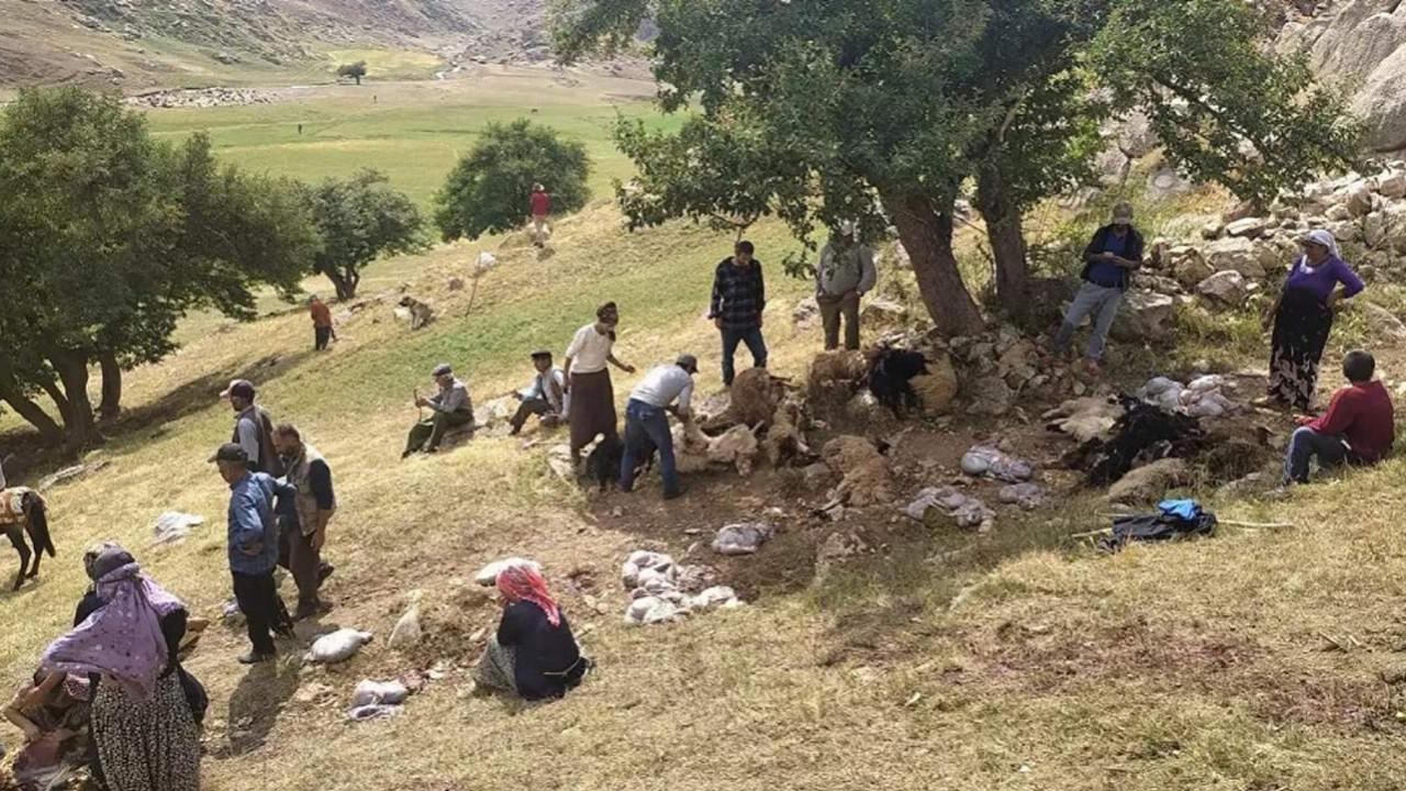 Yıldırım isabet eden 30 koyun öldü