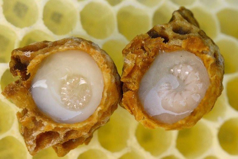 ''Mucize'' denilen arı sütünün binbir derde şifa özellikleri