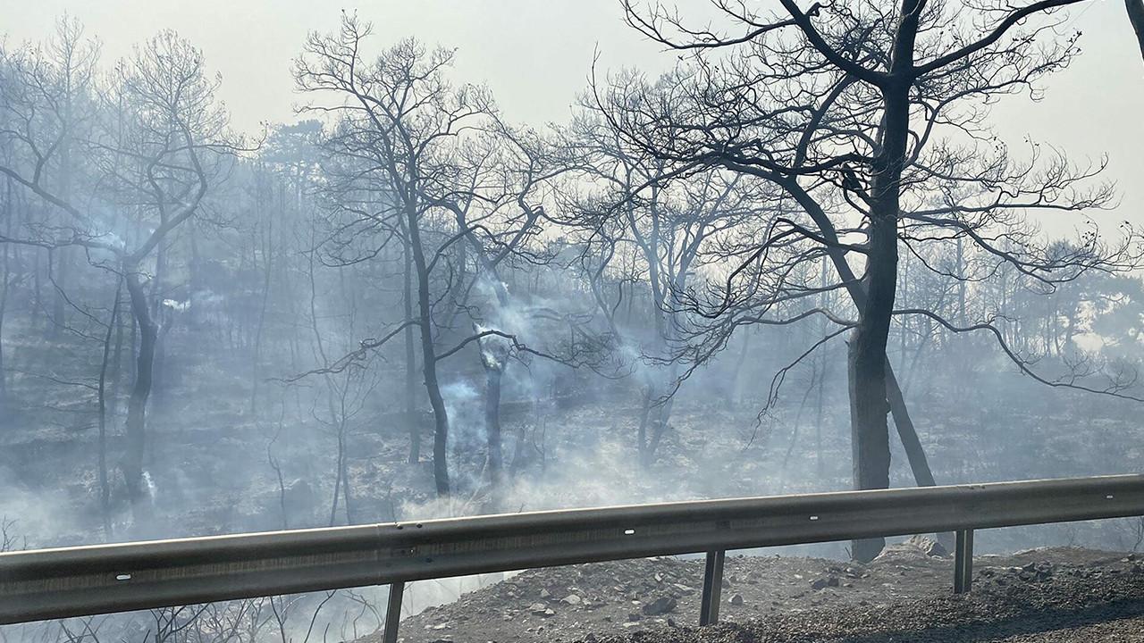 Milas yangını 11 gün sonra kontrol altında