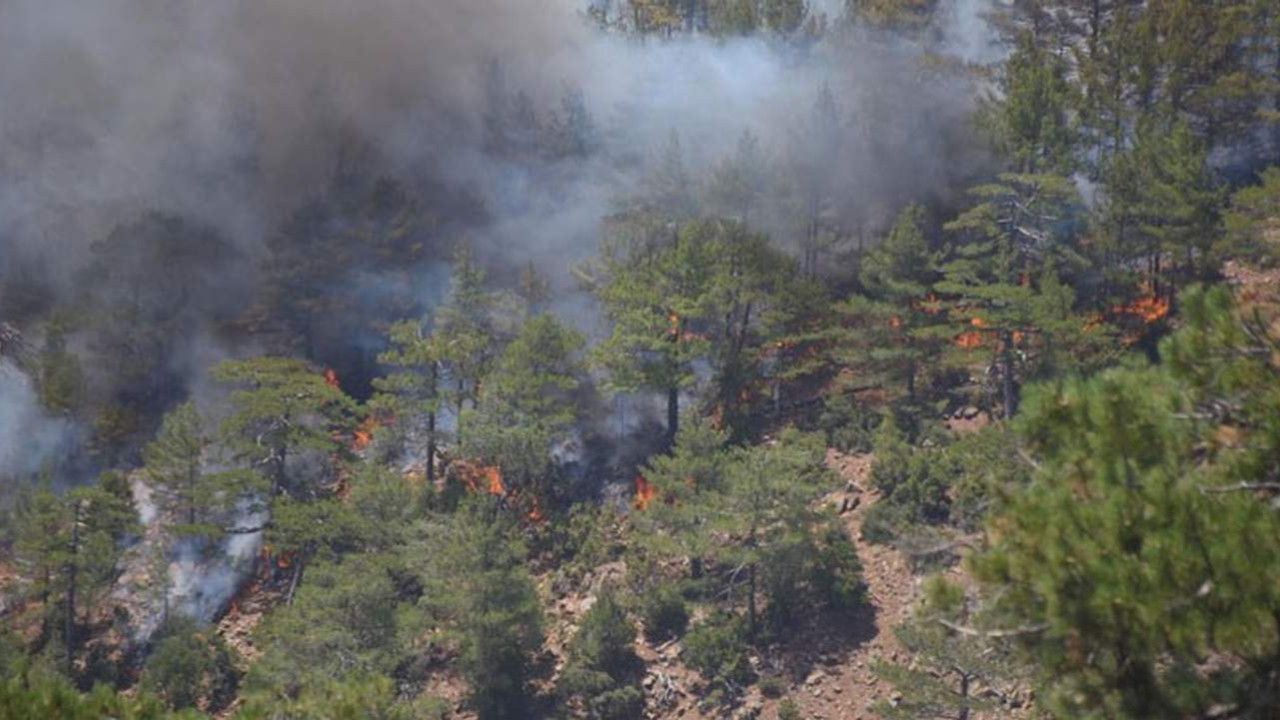 Bitmedi! 275 yangından 274'ü kontrol altında ama Köyceğiz hala yanıyor!