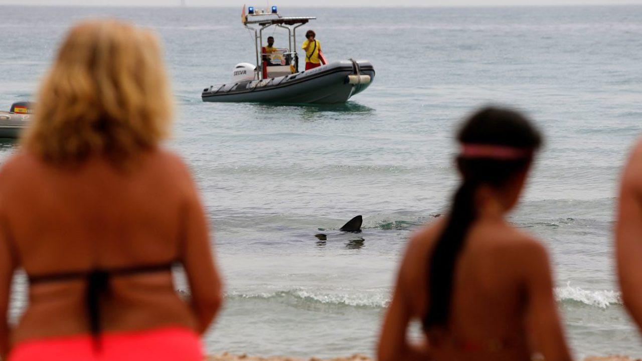 Plajda ''mavi'' canavar paniği: Tatilciler çığlık çığlığa denizden çıktı