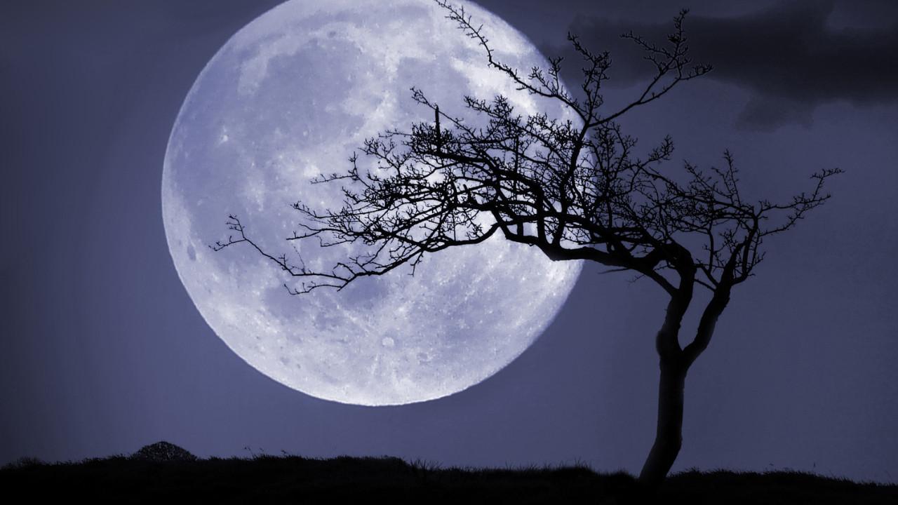 Japonya Ay'da gıda üretecek