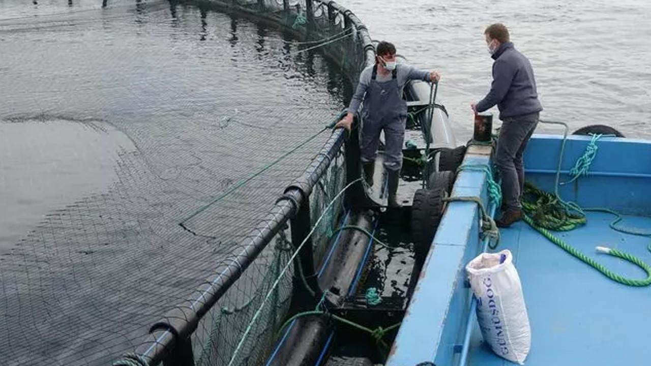 Karadeniz somonuna yurt dışından talep yağıyor