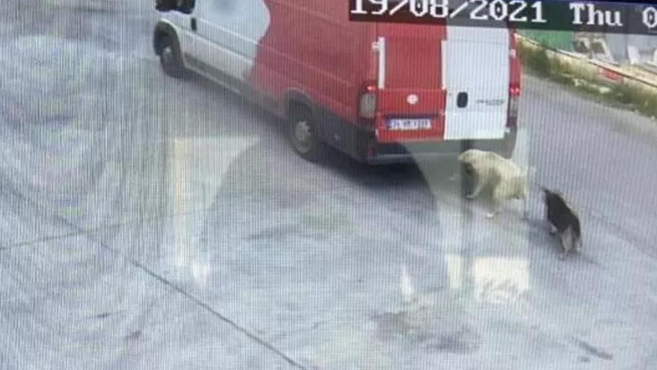 Ataşehir'de kamyonetin ezdiği köpek öldü