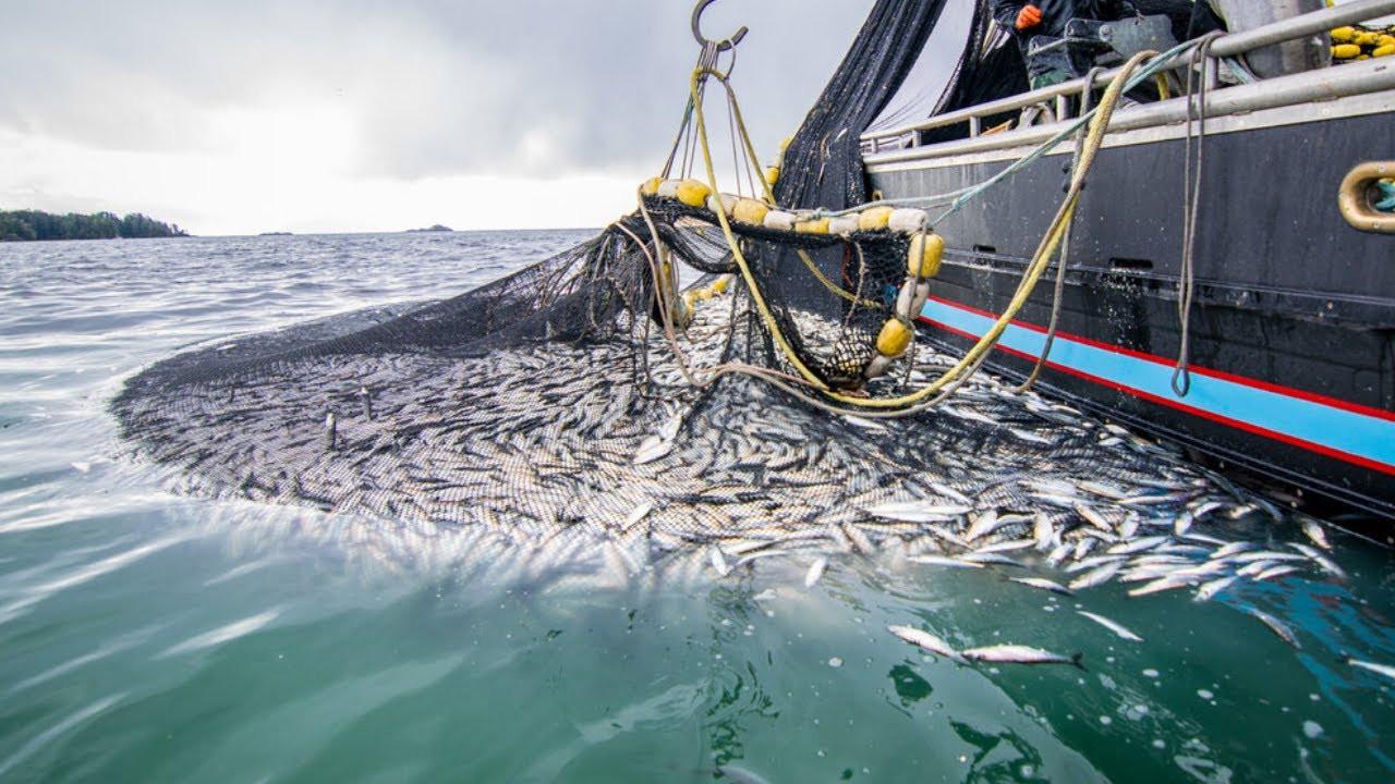 Balık avı sezonu ''müsilaj'' korkusuyla başlıyor