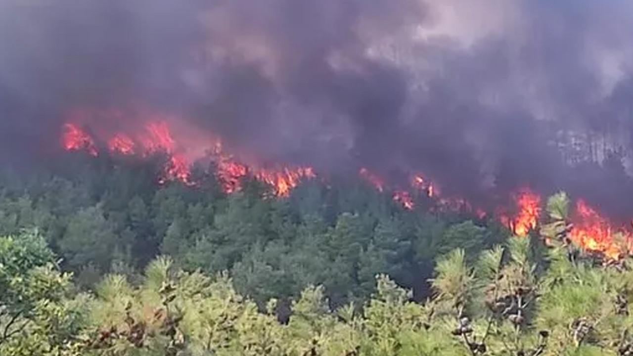Çanakkale'de orman yangını: Bölgeye çok sayıda ekip sevk edildi