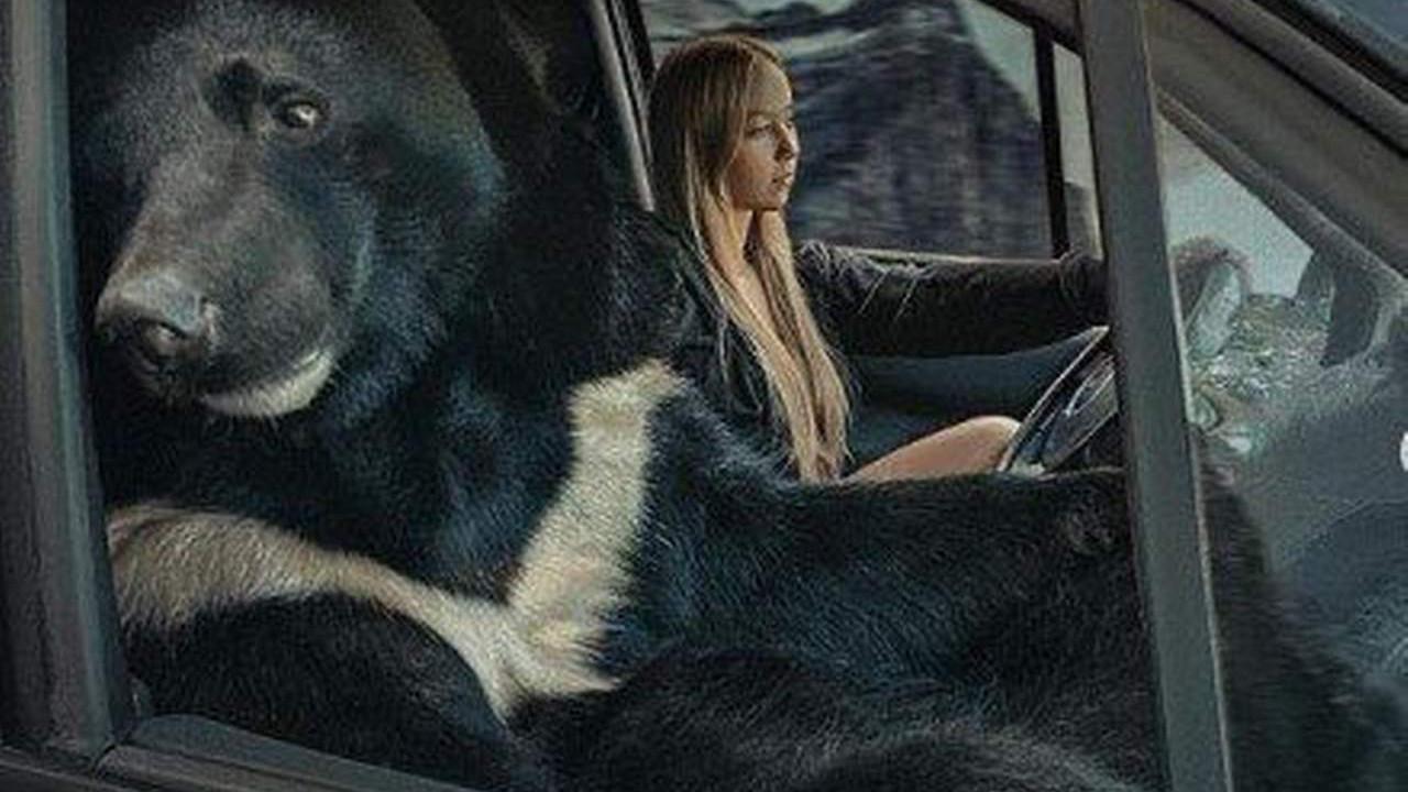 Görenler gözlerine inanamadı! Arabada ayı var!
