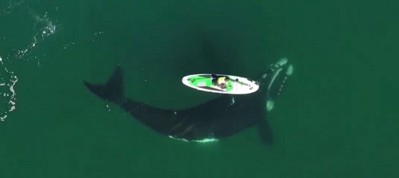 Denizde kano süren kadınla hayatının şokunu yaşadı - Resim: 4