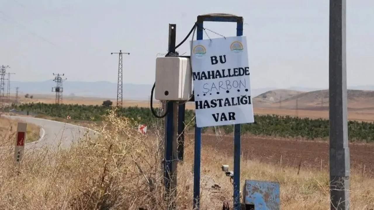 Şarbon yeniden Türkiye'de! İlk karantina haberi geldi