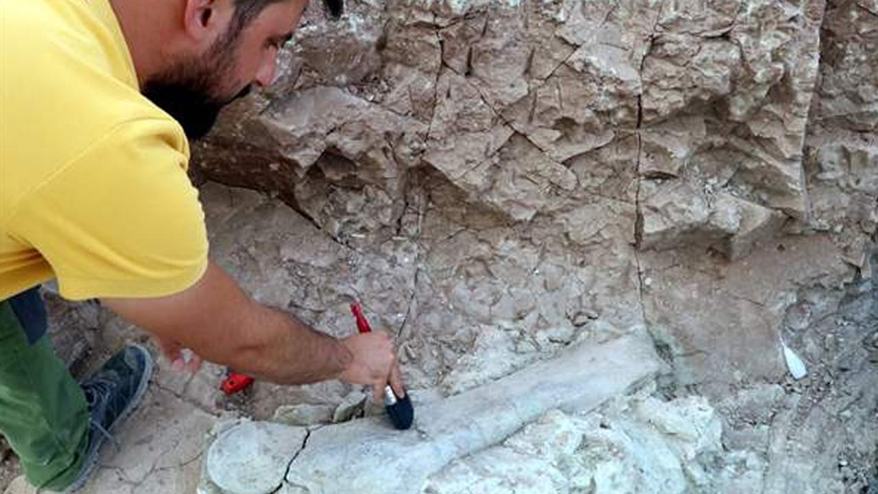 9 milyon yıllık keşif: Fillerin atalarına ait kalıntılar bulundu