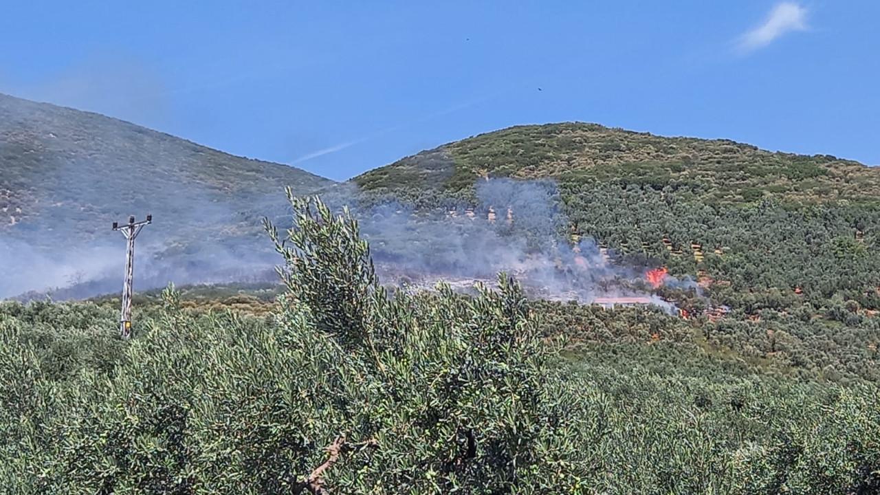 Bursa'da zeytinlik yangını