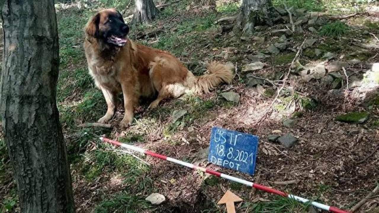 Sahibinin gezmeye çıkardığı köpek, define buldu!