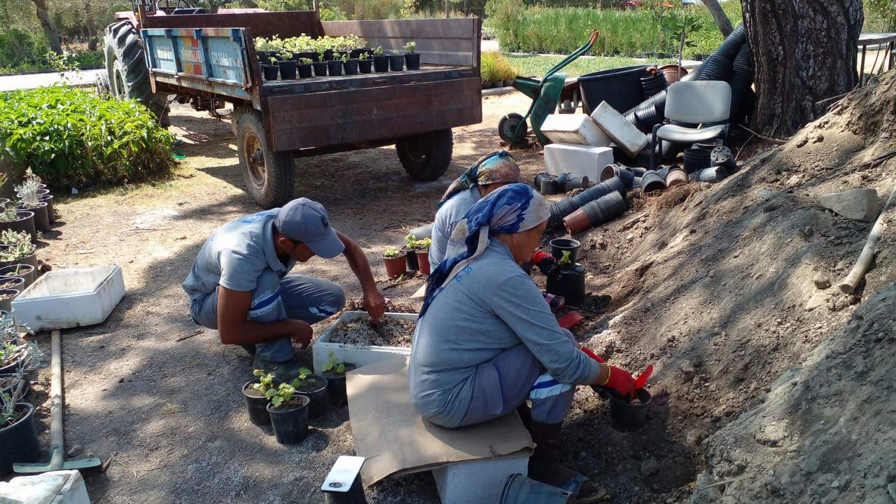Bodrum Belediyesi seralarında yetiştirdiği bitkilerle Bodrum'u güzelleştiriyor