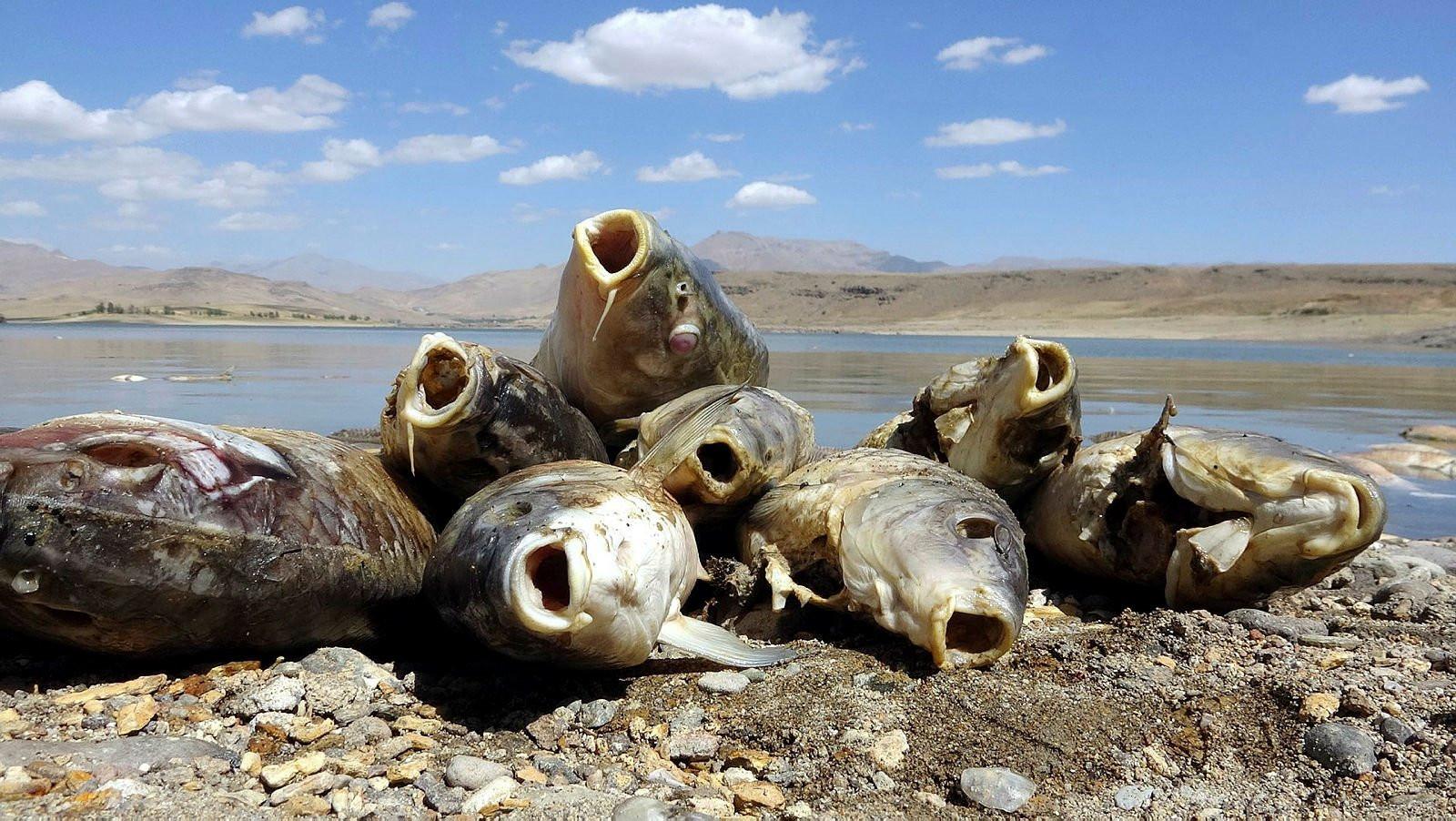 Sahil balık ölüleriyle doldu... Korkunç manzara!