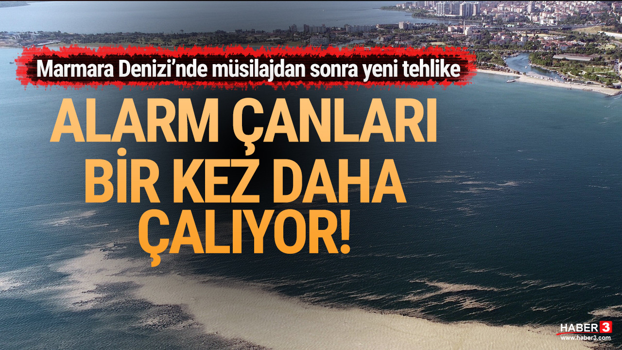 Marmara Denizi'nde müsilajdan sonra yeni tehlike