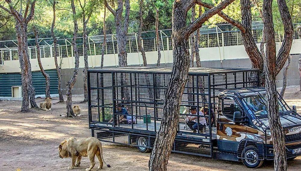 Antalya'da telli kamyonetle ''aslan safarisi''ne tepki yağdı - Resim: 2