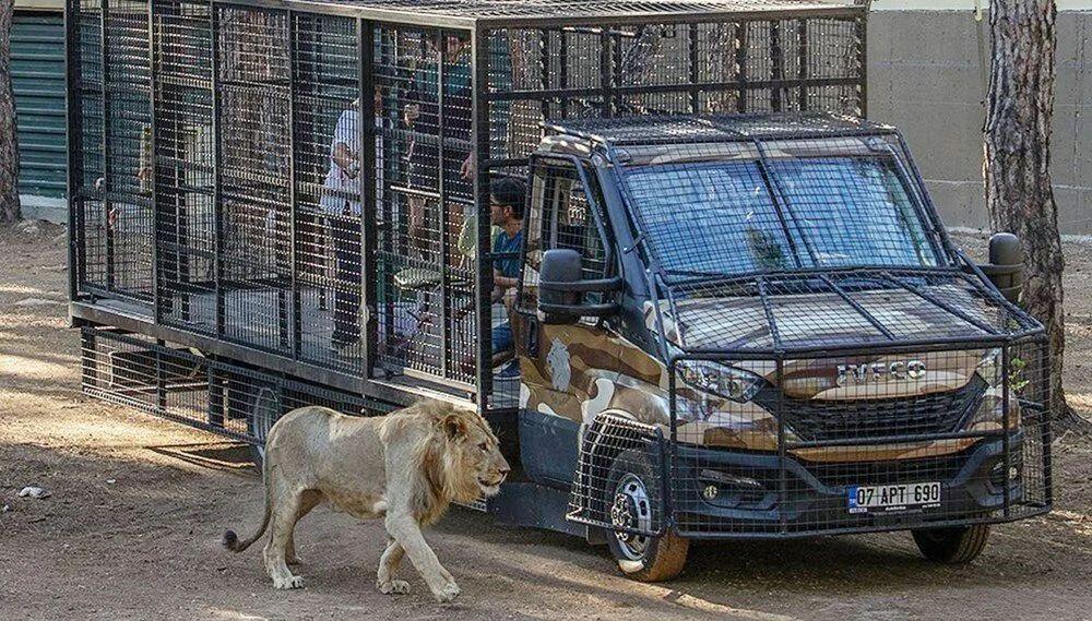 Antalya'da telli kamyonetle ''aslan safarisi''ne tepki yağdı - Resim: 3