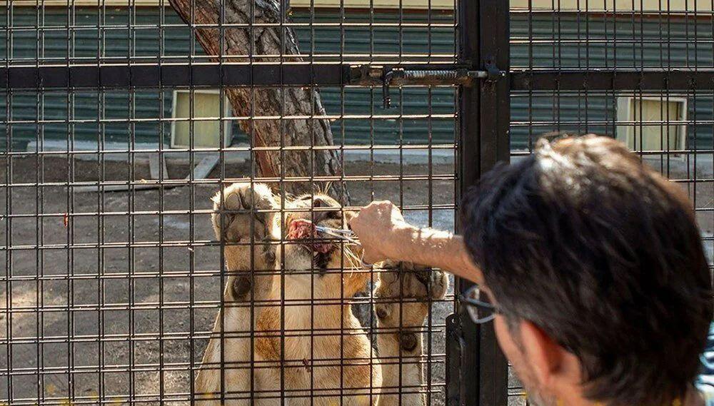 Antalya'da telli kamyonetle ''aslan safarisi''ne tepki yağdı - Resim: 4