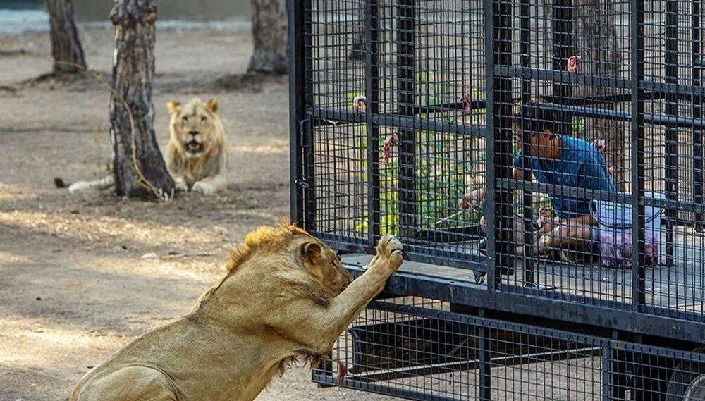 Antalya'da telli kamyonetle ''aslan safarisi''ne tepki yağdı - Resim: 1