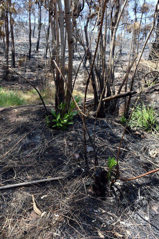 Yangınların kül ettiği Marmaris'te ormanlar yeniden yeşilleniyor - Resim: 1