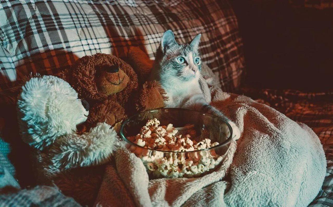 Bilim insanları kedi videoları izleyecek gönüllüler arıyor - Resim: 4
