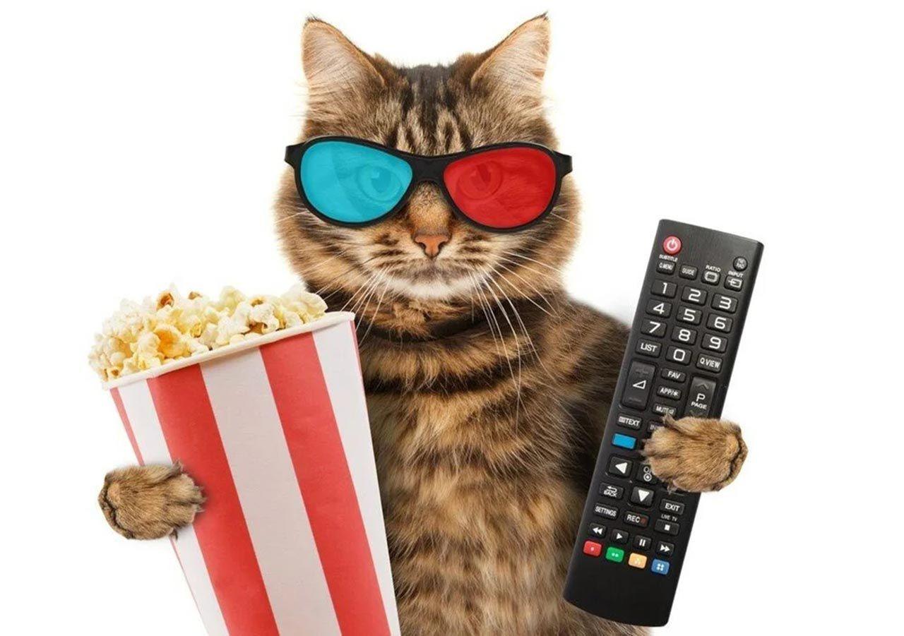 Bilim insanları kedi videoları izleyecek gönüllüler arıyor - Resim: 3