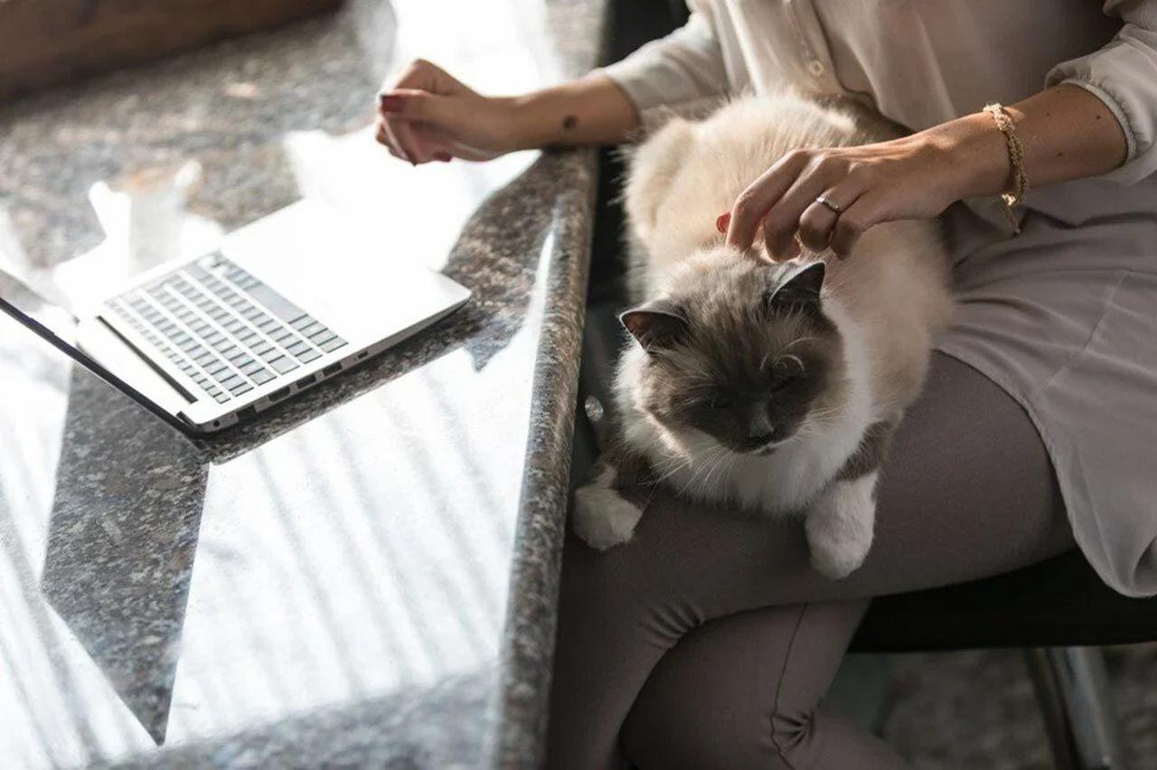 Bilim insanları kedi videoları izleyecek gönüllüler arıyor - Resim: 1