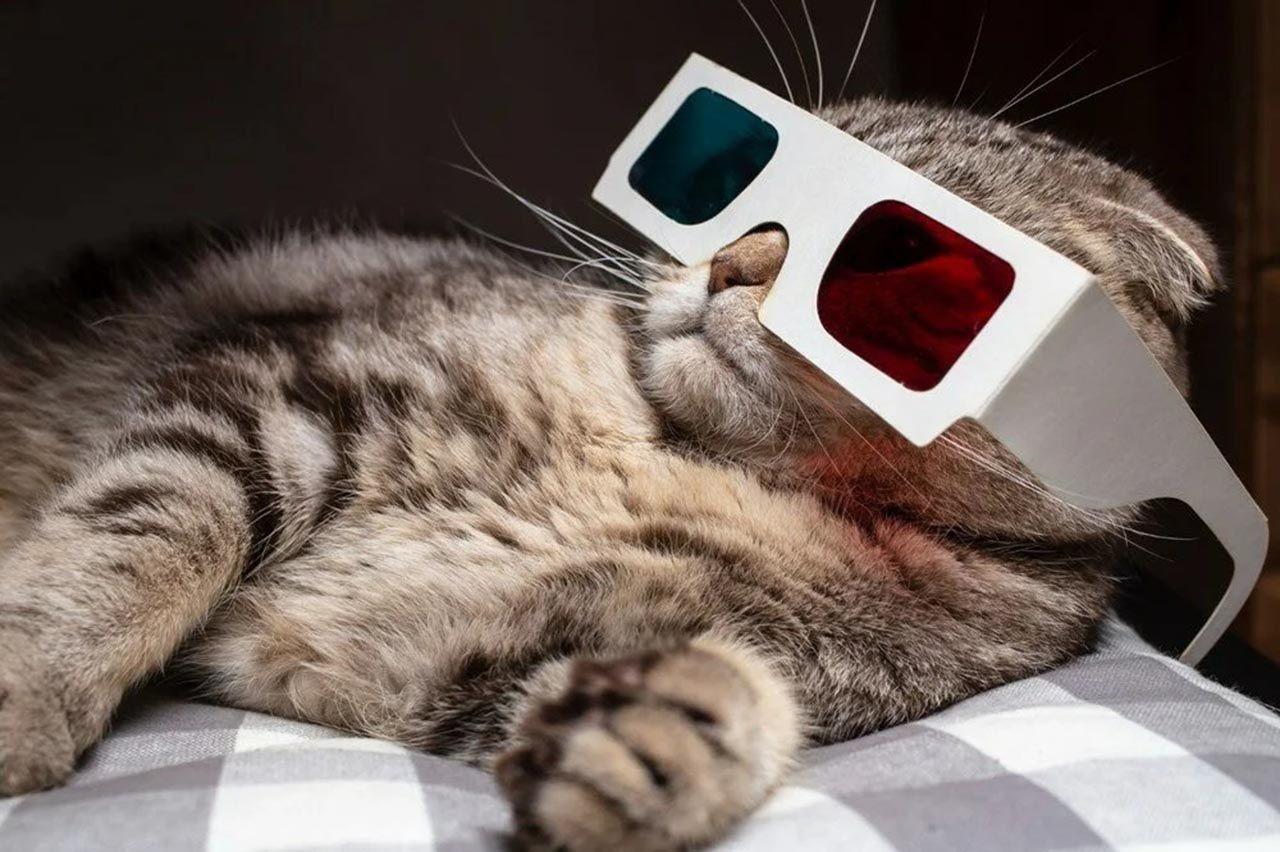 Bilim insanları kedi videoları izleyecek gönüllüler arıyor - Resim: 2