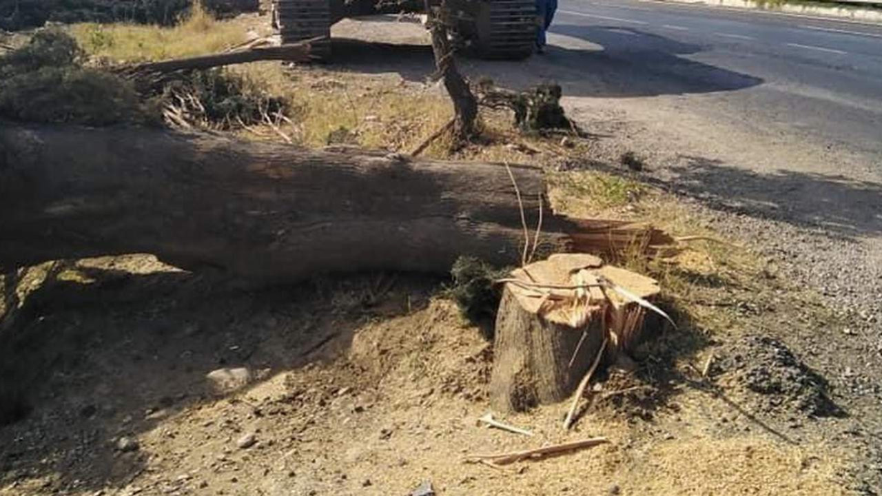 80 yıllık ağaçlarını bakın neden kestiler! Vallahi şaşırmadık, billahi şaşırmadık!