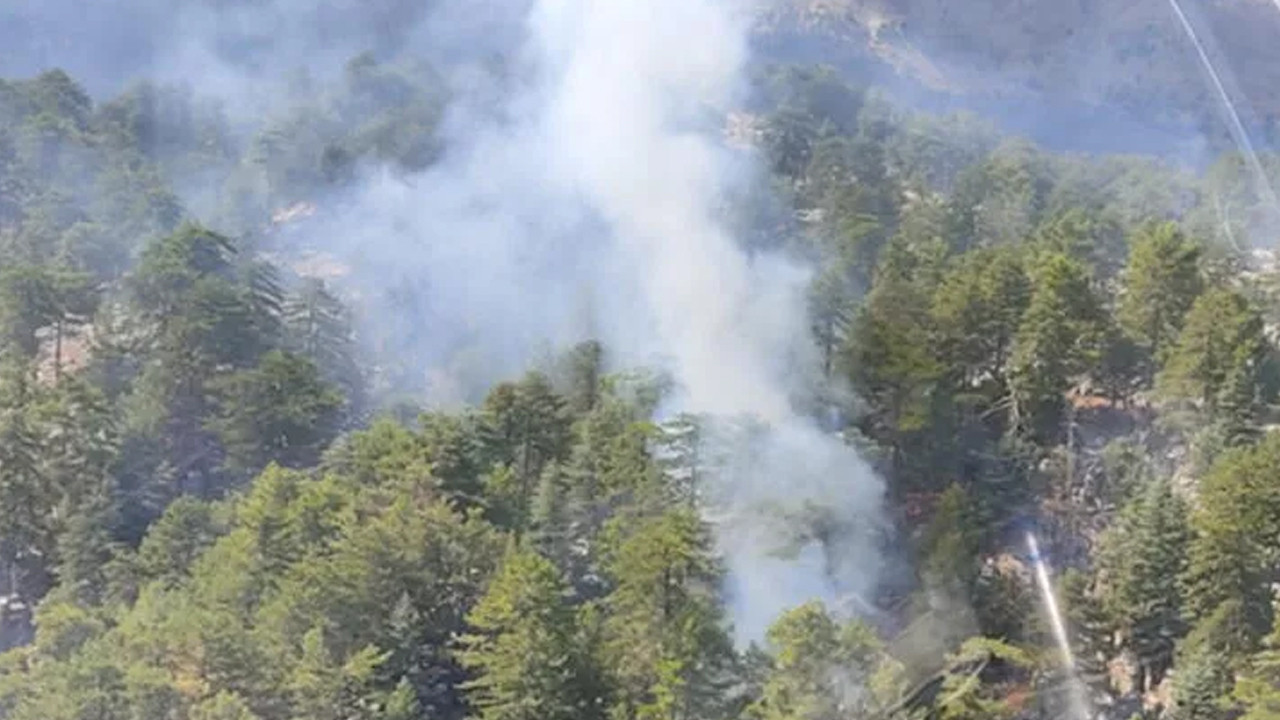 Manavgat'ta yine orman yangını
