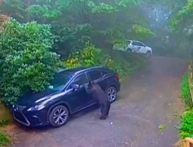 Otomobilinin kapısını açınca dehşete düştü - Resim: 2