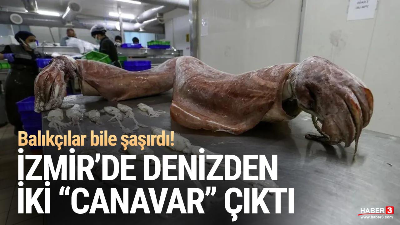 İzmir'de denizden iki dev çıktı! Balıkçılar bile şaşırdı