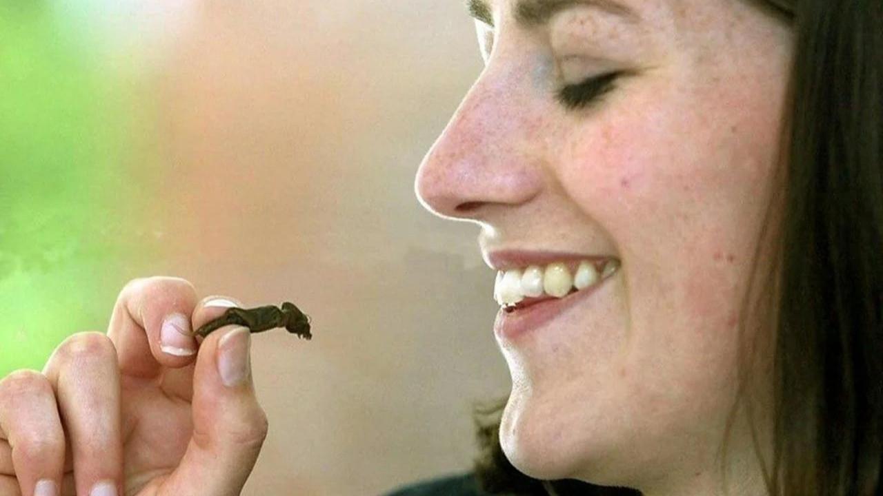 Yenilebilir böcekler süpermarketlere geliyor