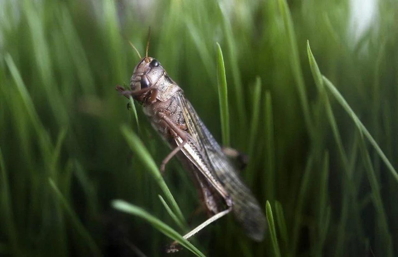Yenilebilir böcekler süpermarketlere geliyor - Resim: 3