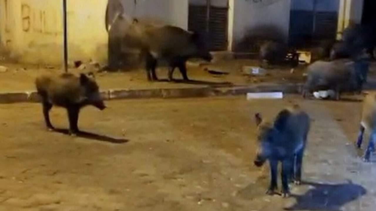 Şehir merkezinde domuzla güldüren diyalog