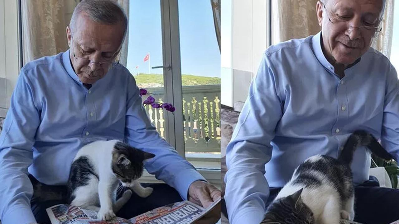 Cumhurbaşkanı Erdoğan'dan kedili fotoğraf