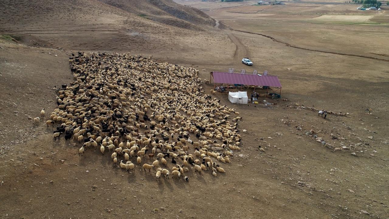 Binlerce koyunun dönüş yolculuğu başladı