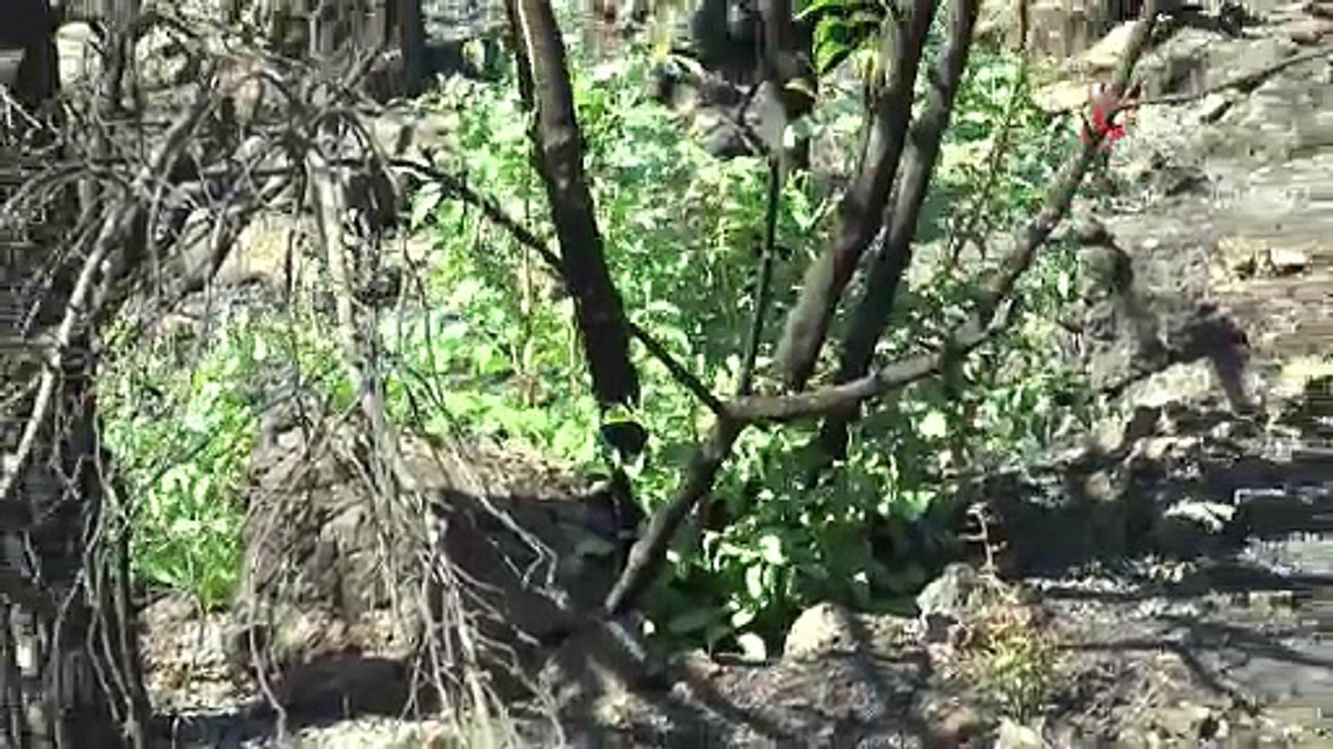Bodrum'un kül olan ormanlarından umutlandıran görüntü