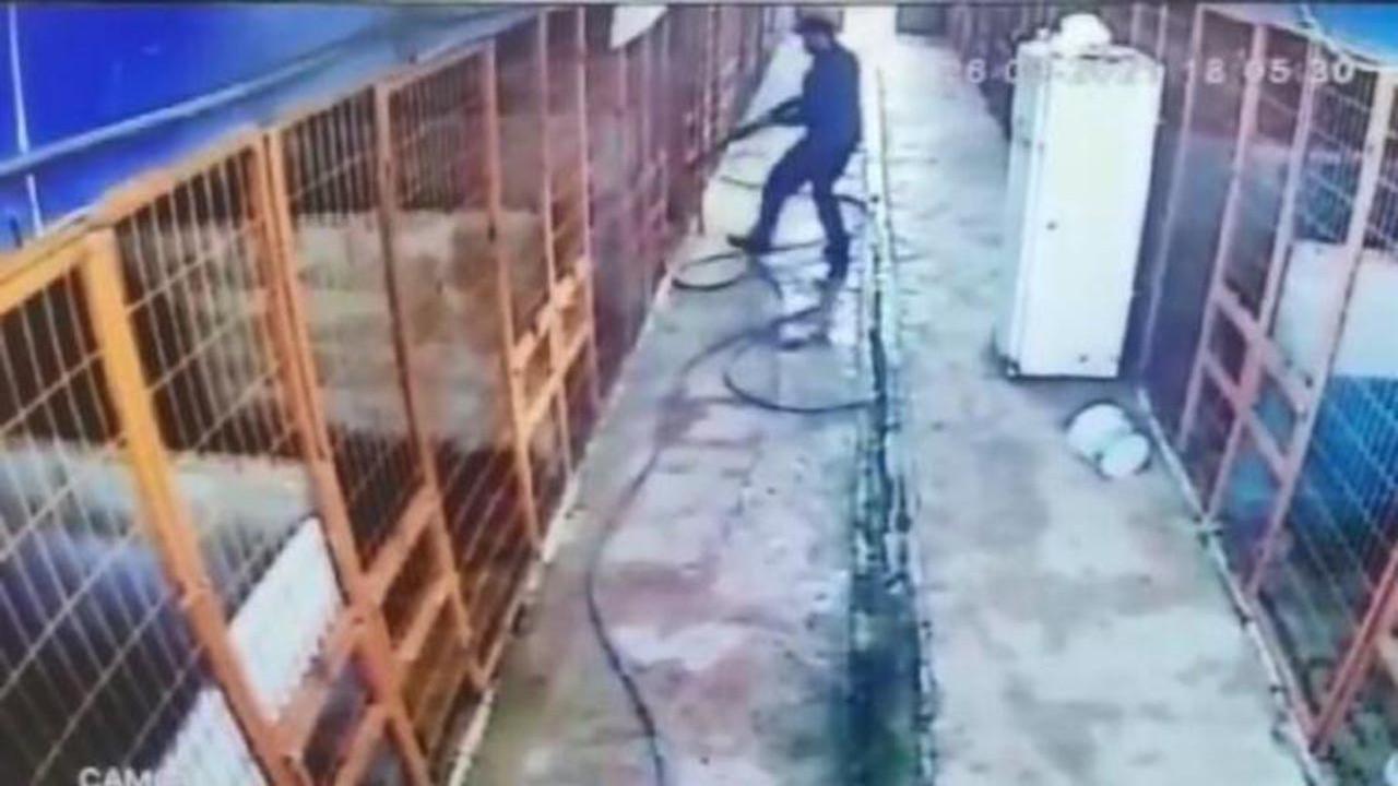 İstanbul'da dehşet! Köpeği av tüfeğiyle öldürdü