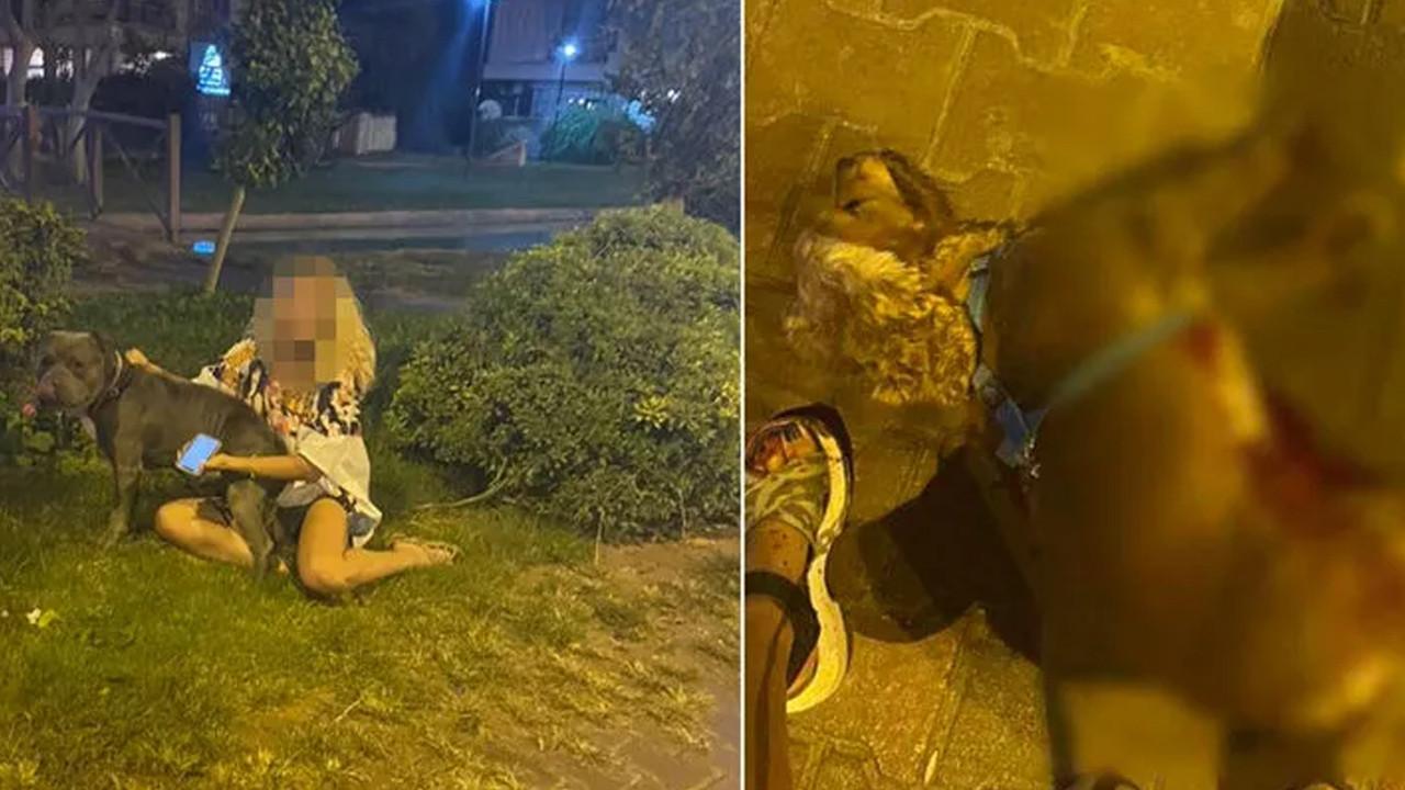 Antalya'da pitbull dehşeti: Sosyal medya ayağa kalktı