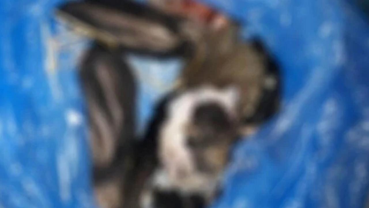 Kuşadası'nda vahşet! 4 köpeği katledip derisini yüzdüler