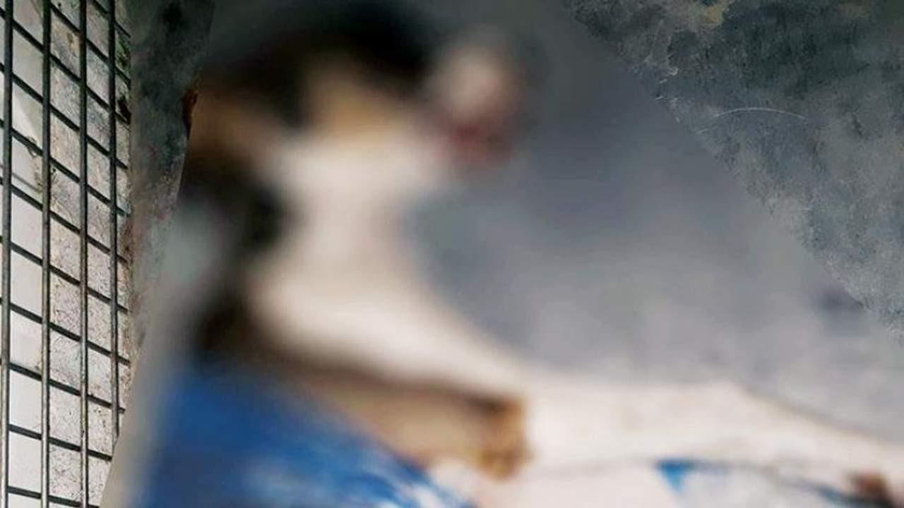 Kuşadası'nda 4 yavru köpeği zehirleyerek öldürdüler