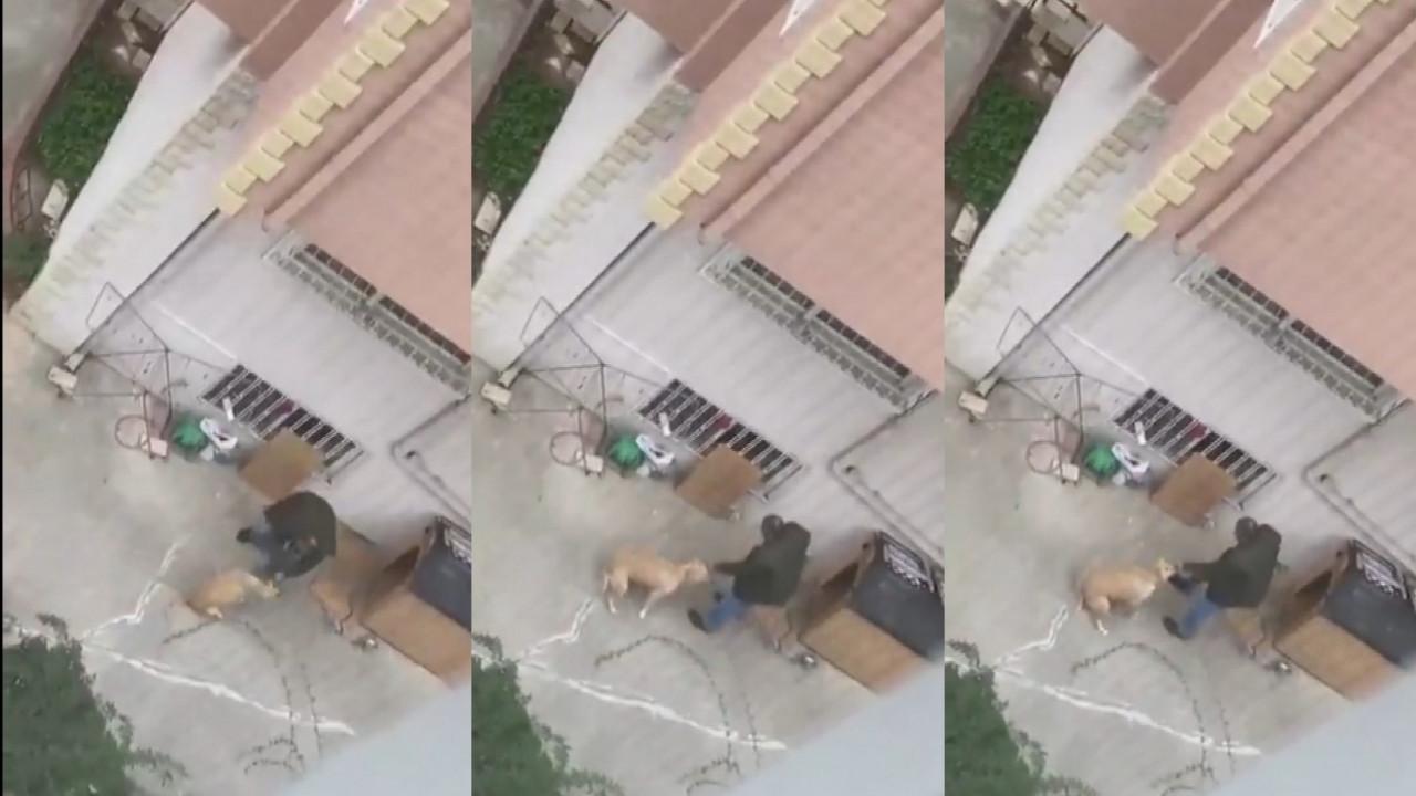 İstanbul'da köpeğe şiddet: İfadesi ortaya çıktı